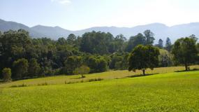 Pasture near Bellingen, NSW Australia.
