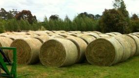 Lucerne hay bales at Aorangi, Fern Hill, Victoria.